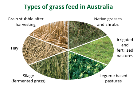 types of grass feeding